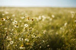 wiosna idzie