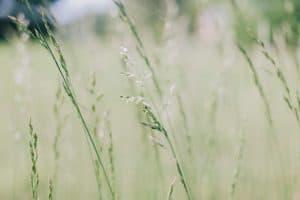 trawy się zielenią